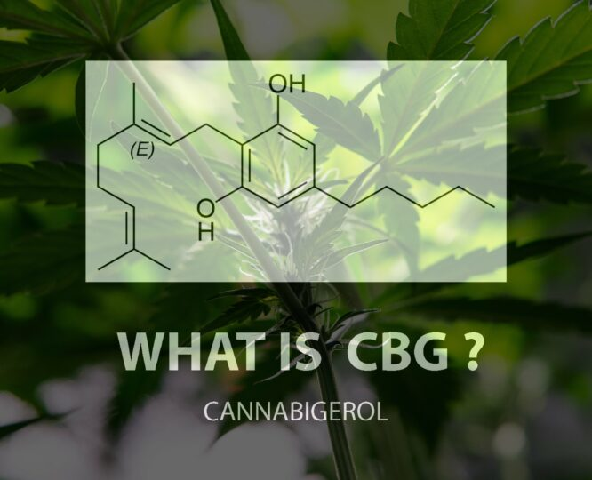 The Trusted Lab CBD - Trusted CBD oil with the best selection of lab-tested, potent and organic CBD oil, tinctures, gummies, soft-gels and creams made in America. Full Spectrum CBD. Broad Spectrum CBD. All natural. Free Shipping. Wholesale CBD.